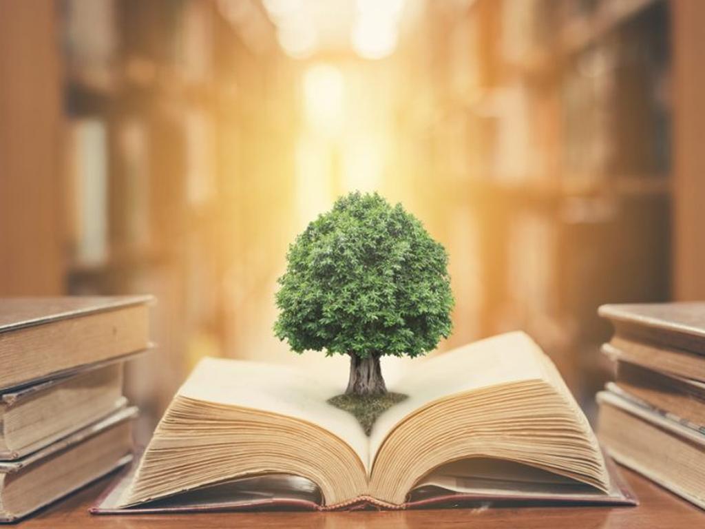 #EscolaVivaSG: compartilhando conhecimentos